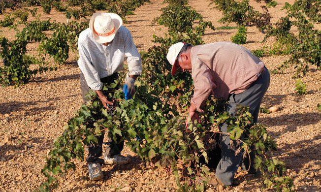 Cómo la reforma tributaria afecta a los agricultores y ganaderos